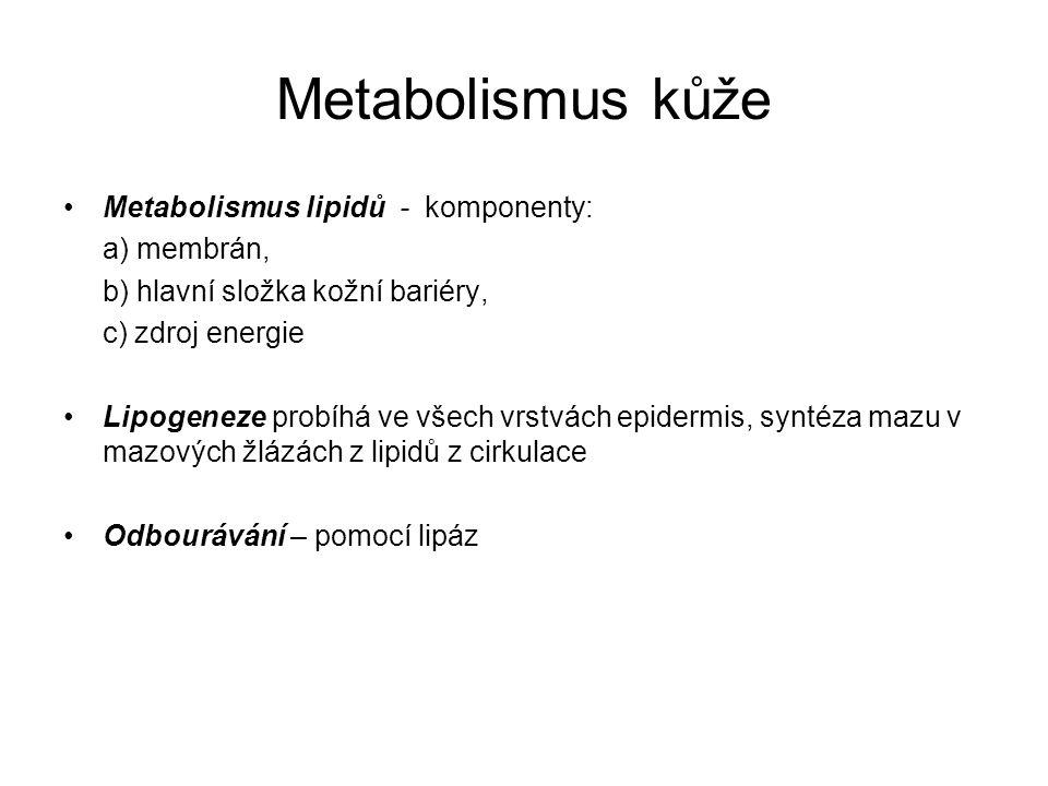 Metabolismus kůže Metabolismus lipidů - komponenty: a) membrán, b) hlavní složka kožní bariéry, c) zdroj energie Lipogeneze probíhá ve všech vrstvách