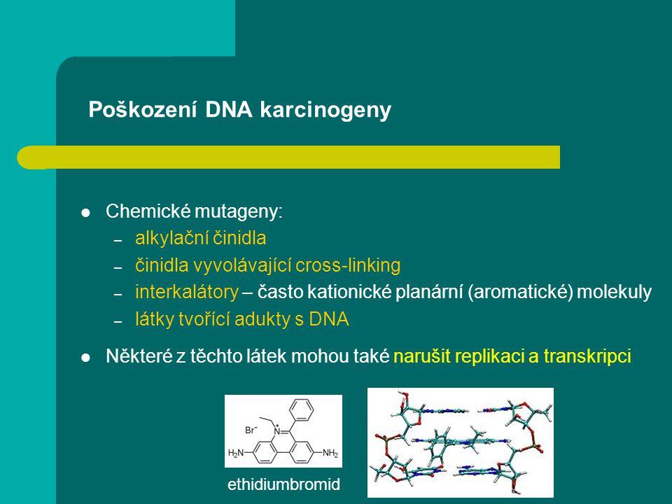 Poškození DNA karcinogeny Chemické mutageny: – alkylační činidla – činidla vyvolávající cross-linking – interkalátory – často kationické planární (aro