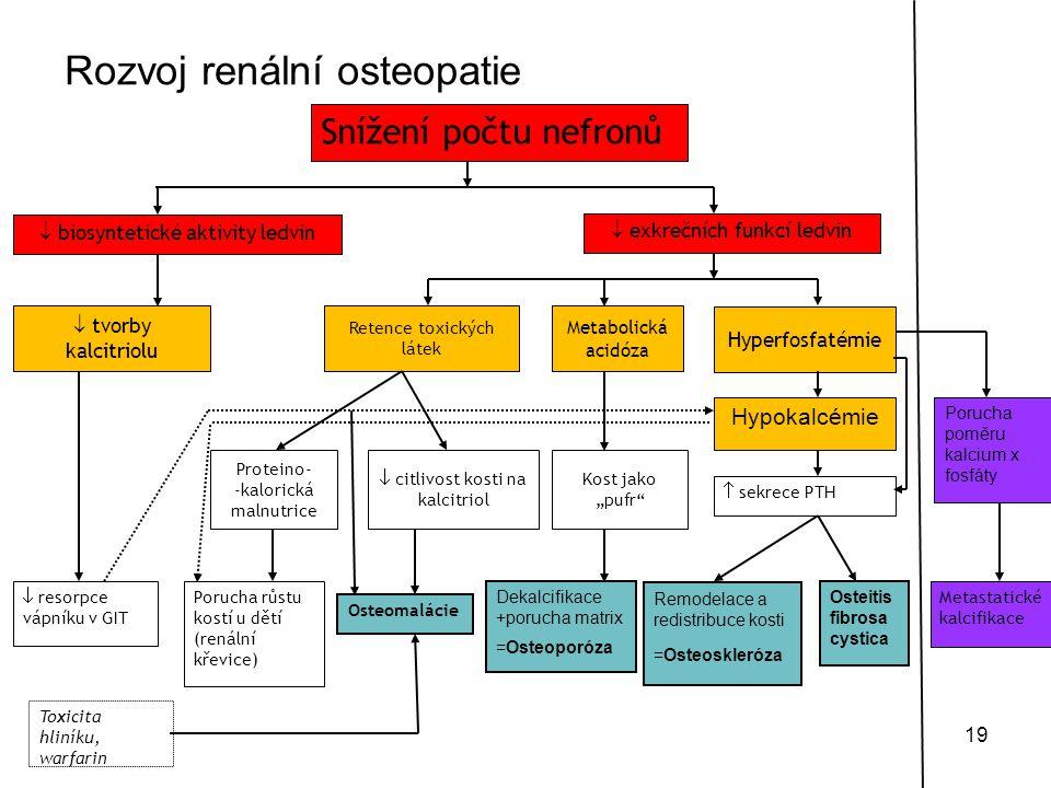 19 Snížení počtu nefronů  biosyntetické aktivity ledvin  tvorby kalcitriolu  resorpce vápníku v GIT  exkrečních funkcí ledvin Retence toxických lá