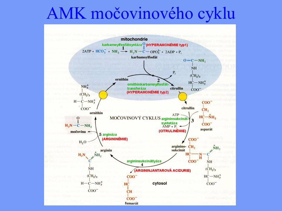 AMK močovinového cyklu