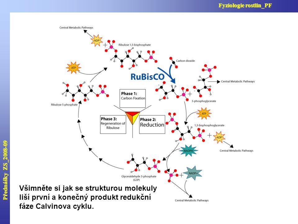 Přednášky ZS_2008-09 Fyziologie rostlin_PF Všimněte si jak se strukturou molekuly liší první a konečný produkt redukční fáze Calvinova cyklu.