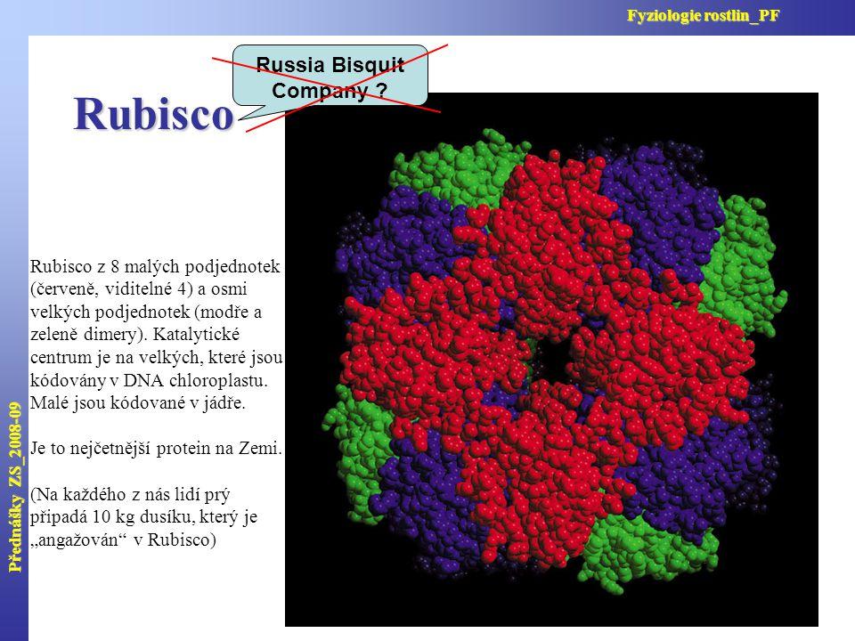Rubisco Rubisco z 8 malých podjednotek (červeně, viditelné 4) a osmi velkých podjednotek (modře a zeleně dimery). Katalytické centrum je na velkých, k