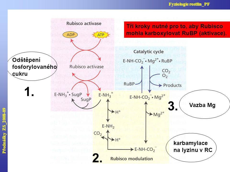 Odštěpení fosforylovaného cukru karbamylace na lyzinu v RC Vazba Mg Přednášky ZS_2008-09 Fyziologie rostlin_PF 1. 2. 3. Tři kroky nutné pro to, aby Ru