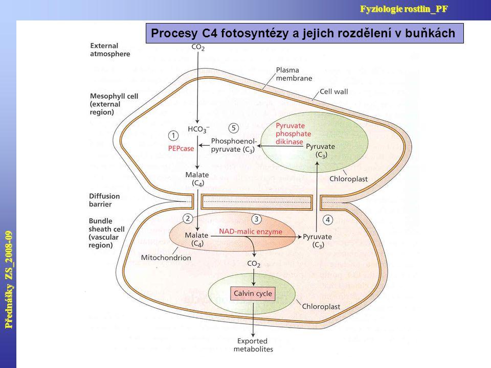 Přednášky ZS_2008-09 Fyziologie rostlin_PF Procesy C4 fotosyntézy a jejich rozdělení v buňkách