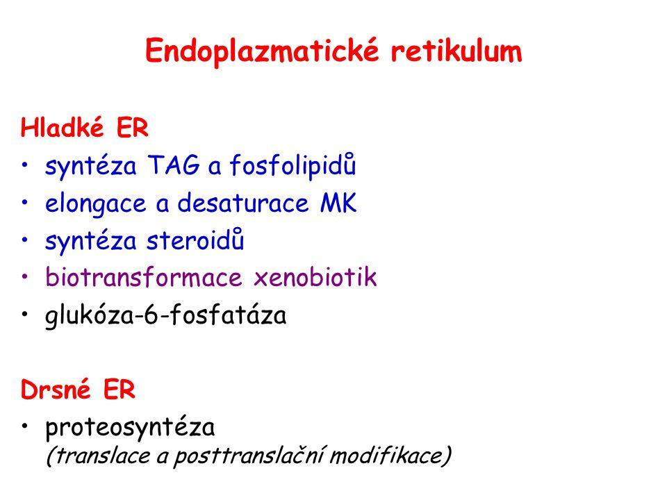 Endoplazmatické retikulum Hladké ER syntéza TAG a fosfolipidů elongace a desaturace MK syntéza steroidů biotransformace xenobiotik glukóza-6-fosfatáza Drsné ER proteosyntéza (translace a posttranslační modifikace)