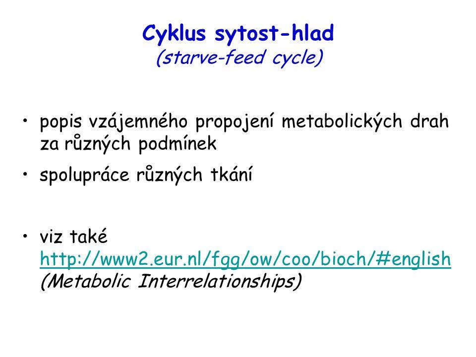 Cyklus sytost-hlad (starve-feed cycle) popis vzájemného propojení metabolických drah za různých podmínek spolupráce různých tkání viz také http://www2.eur.nl/fgg/ow/coo/bioch/#english (Metabolic Interrelationships) http://www2.eur.nl/fgg/ow/coo/bioch/#english