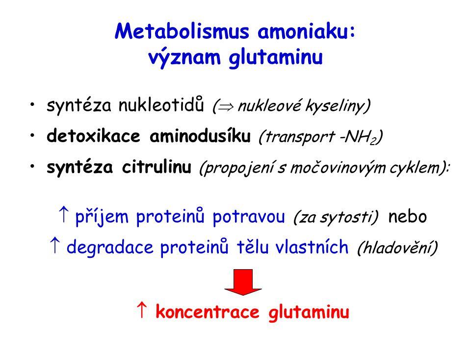 Metabolismus amoniaku: význam glutaminu syntéza nukleotidů (  nukleové kyseliny) detoxikace aminodusíku (transport -NH 2 ) syntéza citrulinu (propojení s močovinovým cyklem):  příjem proteinů potravou (za sytosti) nebo  degradace proteinů tělu vlastních (hladovění)  koncentrace glutaminu