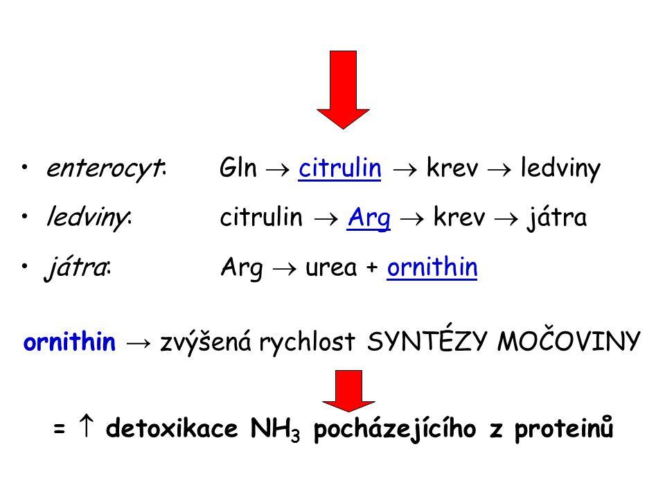 enterocyt: Gln  citrulin  krev  ledviny ledviny: citrulin  Arg  krev  játra játra: Arg  urea + ornithin ornithin → zvýšená rychlost SYNTÉZY MOČOVINY =  detoxikace NH 3 pocházejícího z proteinů
