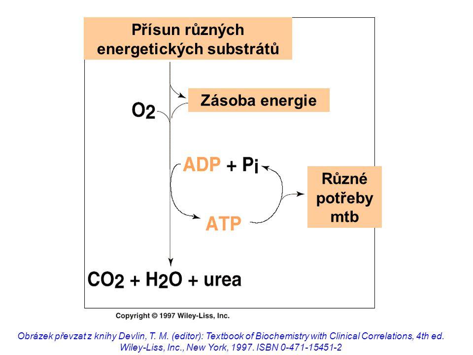 Mitochondrie pyruvátdehydrogenázový komplex (PDH) začátek glukoneogeneze  -oxidace mastných kyselin syntéza ketolátek (pouze v játrech!) oxidační deaminace glutamátu transaminační reakce citrátový cyklus dýchací řetězec (vnitřní mitochondriální membrána) aerobní fosforylace (vnitřní mitoch.