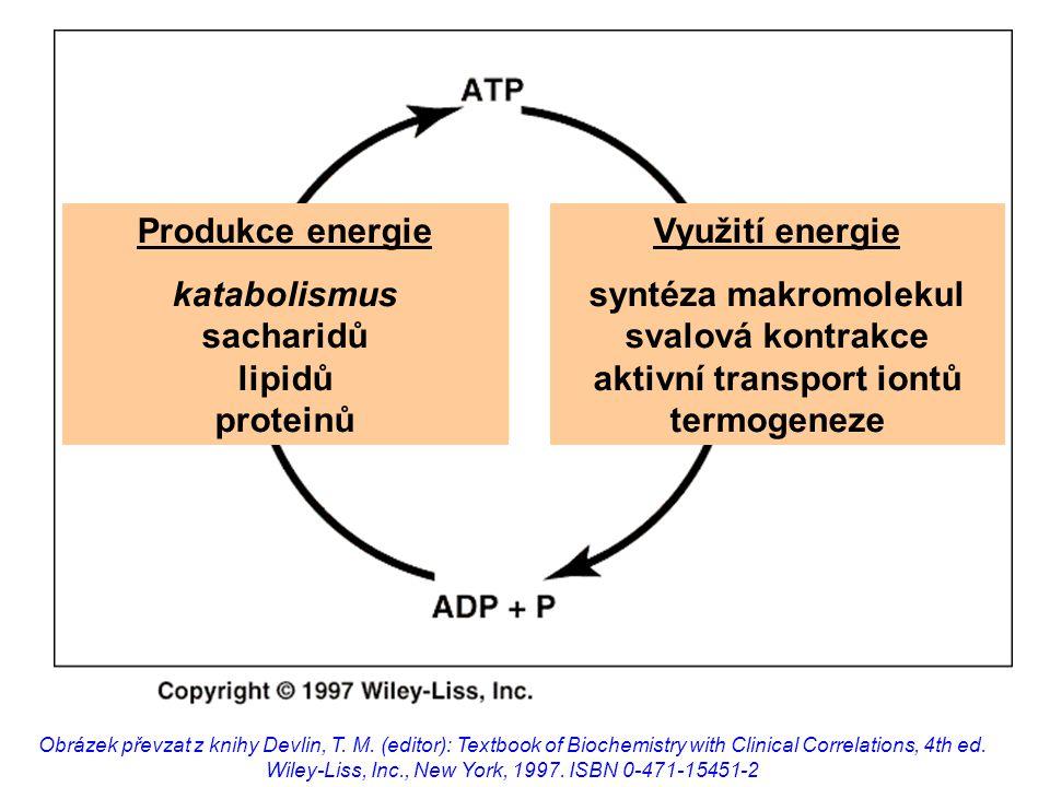 PO JÍDLEHLADOVĚNÍ hormony  inzulin  glukagon, adrenalin, kortizol odpověď organismu  glykémie  lipogeneze  proteosyntéza  glykémie  lipolýza  ketogeneze  proteolýza