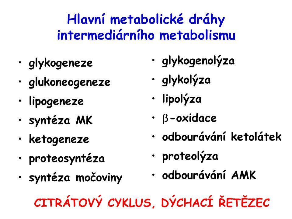 Hlavní metabolické dráhy intermediárního metabolismu glykogeneze glukoneogeneze lipogeneze syntéza MK ketogeneze proteosyntéza syntéza močoviny glykogenolýza glykolýza lipolýza  -oxidace odbourávání ketolátek proteolýza odbourávání AMK CITRÁTOVÝ CYKLUS, DÝCHACÍ ŘETĚZEC