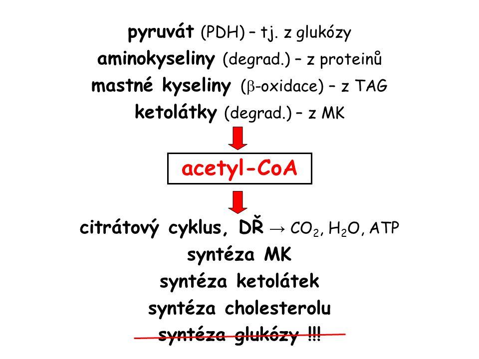aerobní glykolýza oxidací laktátu (LD) degradací některých AMK pyruvát acetyl-CoA (PDH) laktát (laktátdehydrogenáza) alanin (alaninaminotransferáza) oxalacetát (pyruvátkarboxyláza) glukóza (glukoneogeneze)