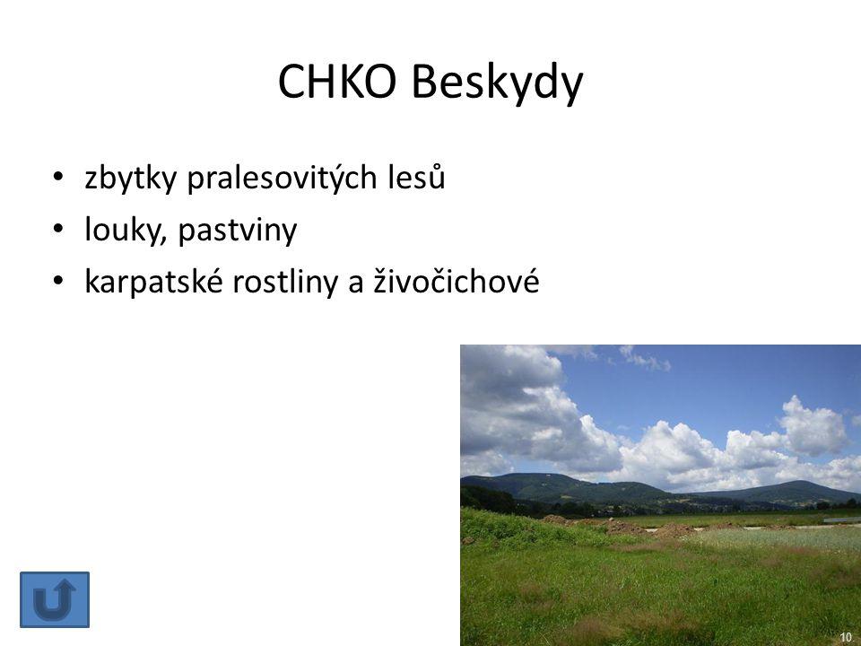 CHKO Beskydy zbytky pralesovitých lesů louky, pastviny karpatské rostliny a živočichové 10.
