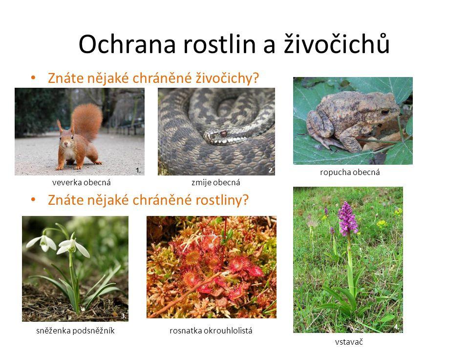 Ochrana rostlin a živočichů Znáte nějaké chráněné živočichy? Znáte nějaké chráněné rostliny? 2. 4. 3. 1. veverka obecná vstavač ropucha obecná zmije o