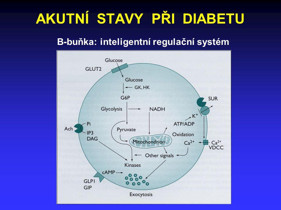 AKUTNÍ STAVY PŘI DIABETU B-buňka: inteligentní regulační systém