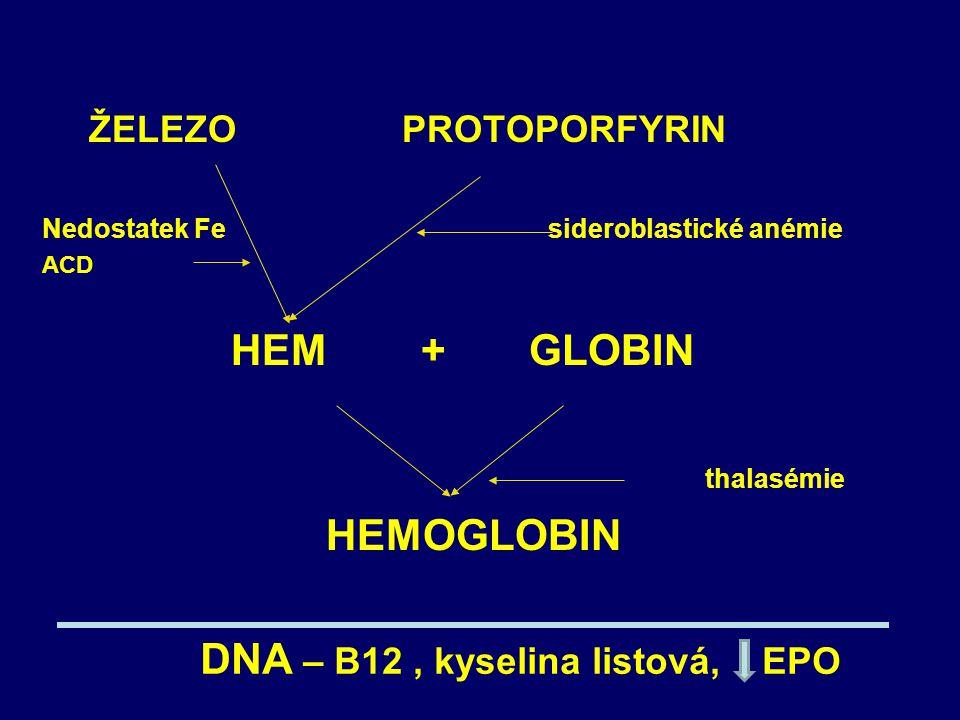 ŽELEZO PROTOPORFYRIN Nedostatek Fe sideroblastické anémie ACD HEM + GLOBIN thalasémie HEMOGLOBIN DNA – B12, kyselina listová, EPO