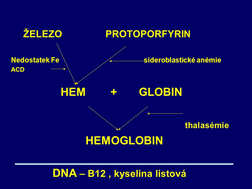 ŽELEZO PROTOPORFYRIN Nedostatek Fe sideroblastické anémie ACD HEM + GLOBIN thalasémie HEMOGLOBIN DNA – B12, kyselina listová