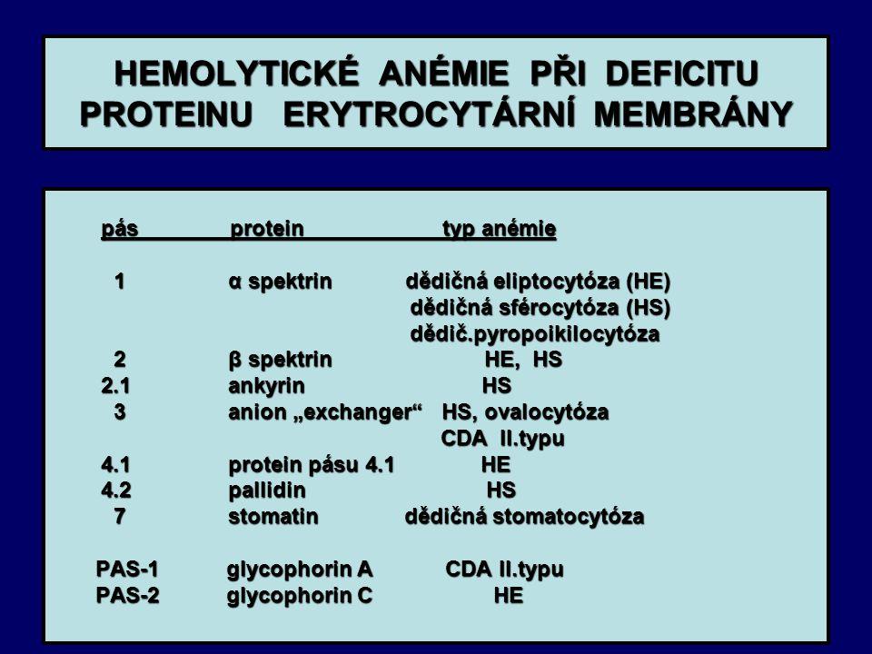 HEMOLYTICKÉ ANÉMIE PŘI DEFICITU PROTEINU ERYTROCYTÁRNÍ MEMBRÁNY pás protein typ anémie pás protein typ anémie 1 α spektrin dědičná eliptocytóza (HE) 1