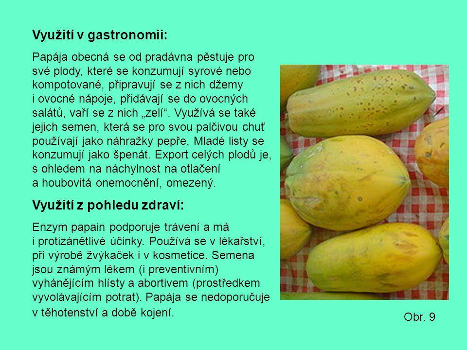 Využití v gastronomii: Papája obecná se od pradávna pěstuje pro své plody, které se konzumují syrové nebo kompotované, připravují se z nich džemy i ov