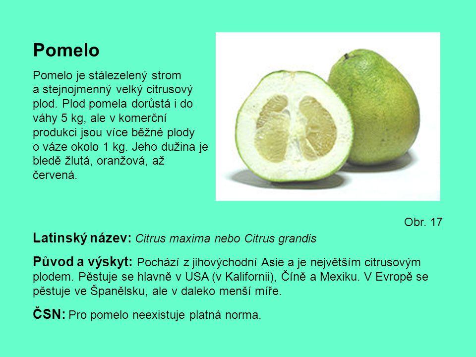 Pomelo Pomelo je stálezelený strom a stejnojmenný velký citrusový plod. Plod pomela dorůstá i do váhy 5 kg, ale v komerční produkci jsou více běžné pl