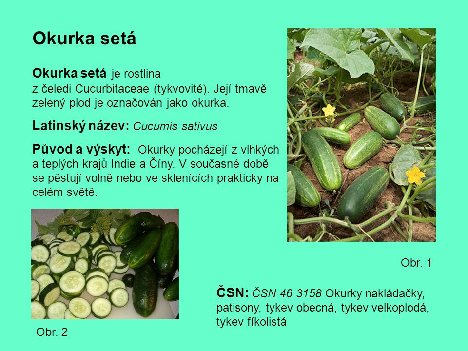 Okurka setá Okurka setá je rostlina z čeledi Cucurbitaceae (tykvovité). Její tmavě zelený plod je označován jako okurka. Latinský název: Cucumis sativ
