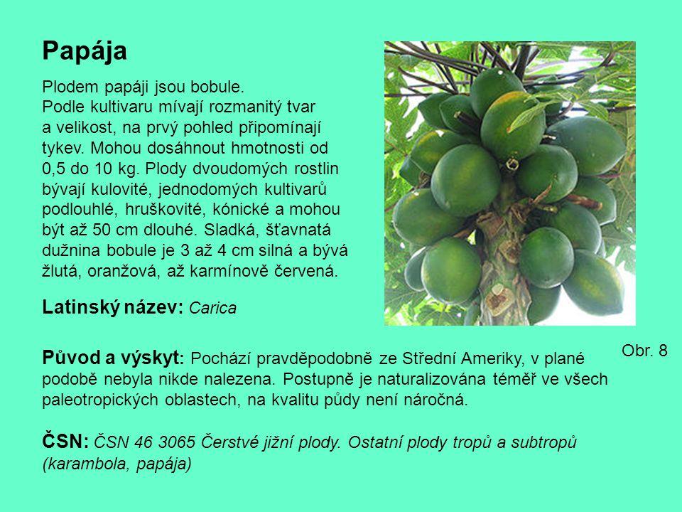 Papája Plodem papáji jsou bobule. Podle kultivaru mívají rozmanitý tvar a velikost, na prvý pohled připomínají tykev. Mohou dosáhnout hmotnosti od 0,5