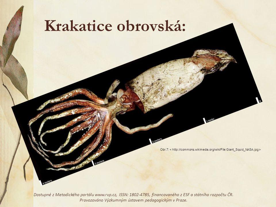 Krakatice obrovská: Obr.7: Dostupné z Metodického portálu www.rvp.cz, ISSN: 1802-4785, financovaného z ESF a státního rozpočtu ČR. Provozováno Výzkumn