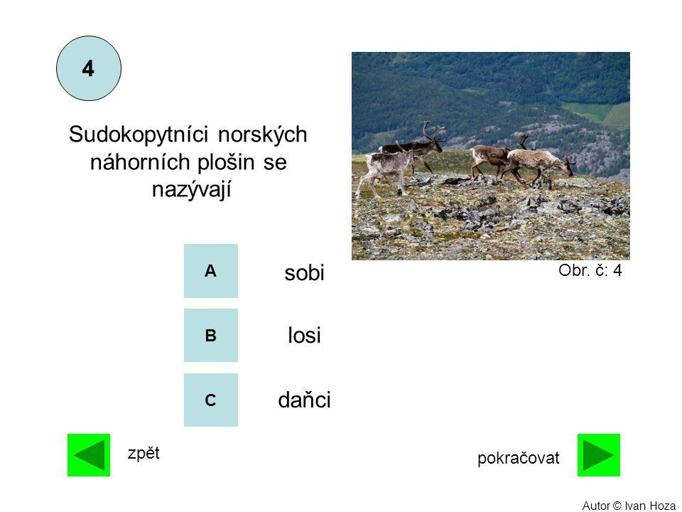 A B C sobi losi daňci Sudokopytníci norských náhorních plošin se nazývají 4 zpět pokračovat Obr. č: 4 Autor © Ivan Hoza