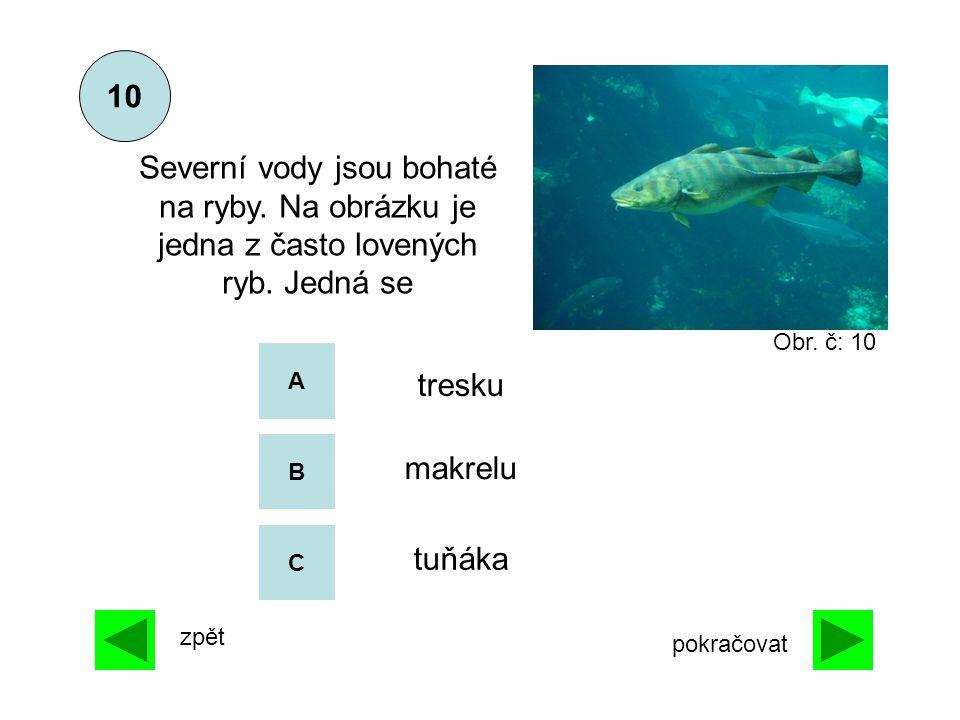 A B C makrelu tuňáka Severní vody jsou bohaté na ryby. Na obrázku je jedna z často lovených ryb. Jedná se 10 tresku zpět pokračovat Obr. č: 10
