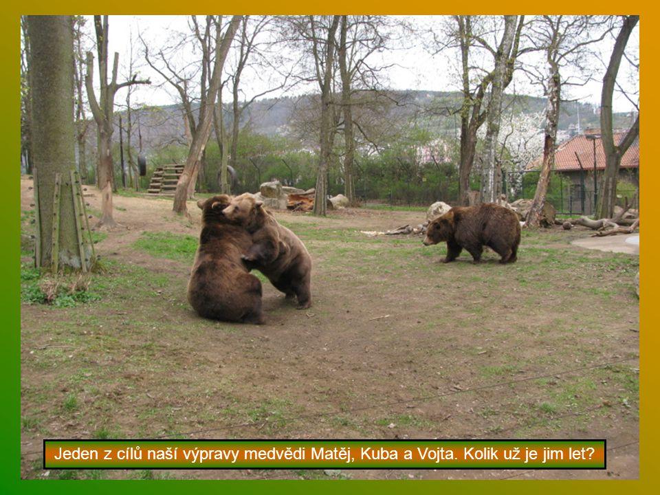 Jeden z cílů naší výpravy medvědi Matěj, Kuba a Vojta. Kolik už je jim let?