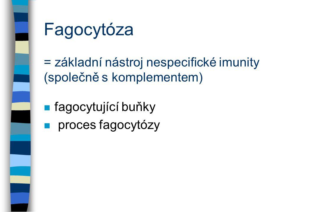 Fagocytóza = základní nástroj nespecifické imunity (společně s komplementem) n fagocytující buňky n proces fagocytózy