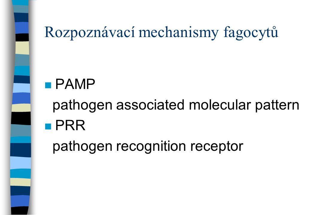 Rozpoznávací mechanismy fagocytů n PAMP pathogen associated molecular pattern n PRR pathogen recognition receptor