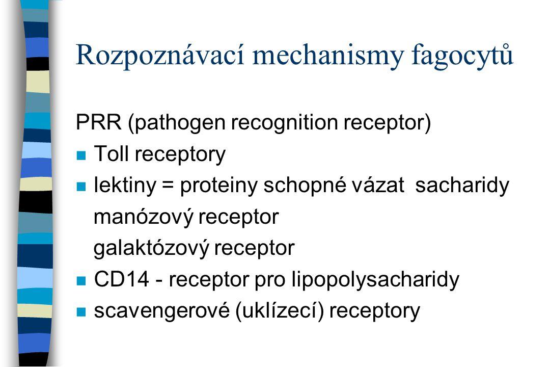 Rozpoznávací mechanismy fagocytů PRR (pathogen recognition receptor) n Toll receptory n lektiny = proteiny schopné vázat sacharidy manózový receptor g