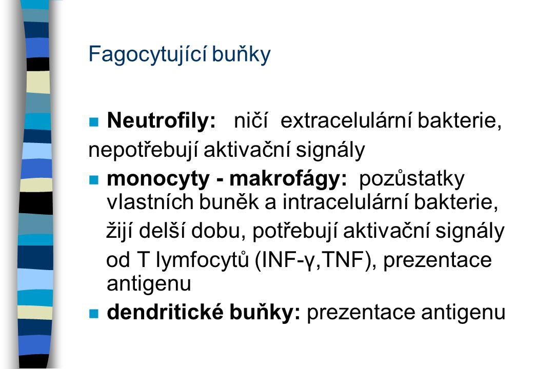 Fagocytující buňky n Neutrofily: ničí extracelulární bakterie, nepotřebují aktivační signály n monocyty - makrofágy: pozůstatky vlastních buněk a intr