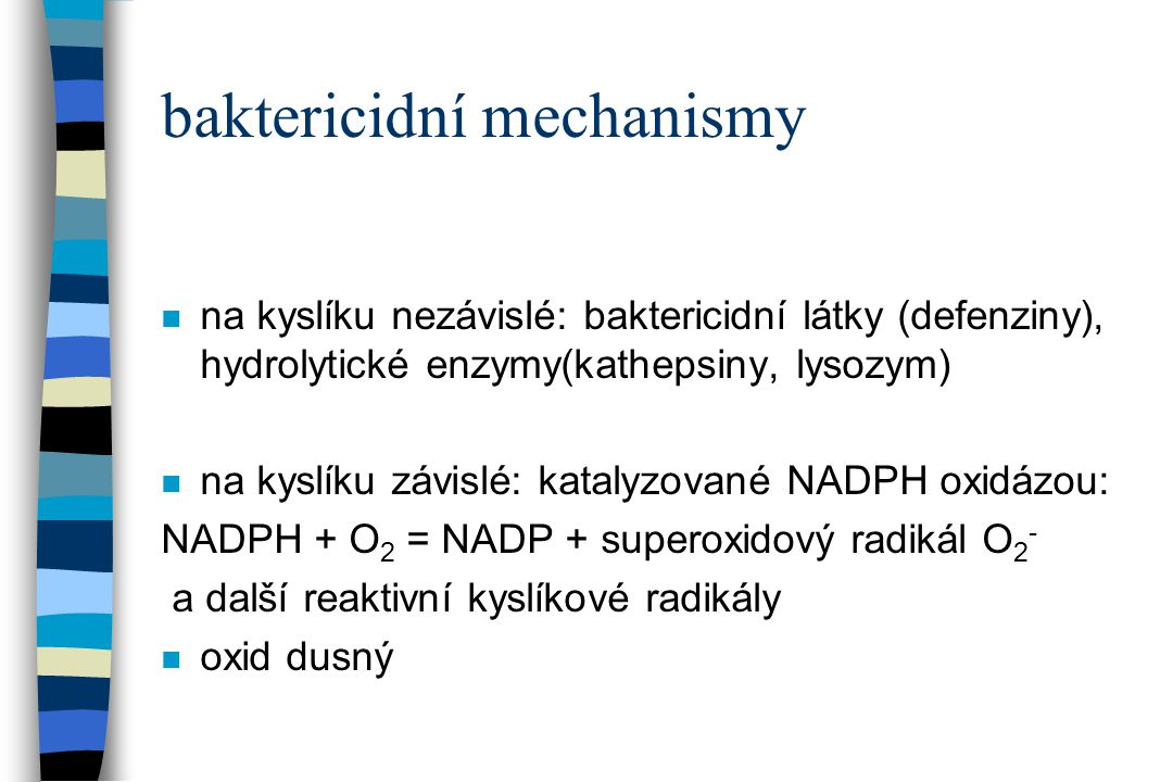 baktericidní mechanismy n na kyslíku nezávislé: baktericidní látky (defenziny), hydrolytické enzymy(kathepsiny, lysozym) n na kyslíku závislé: katalyz