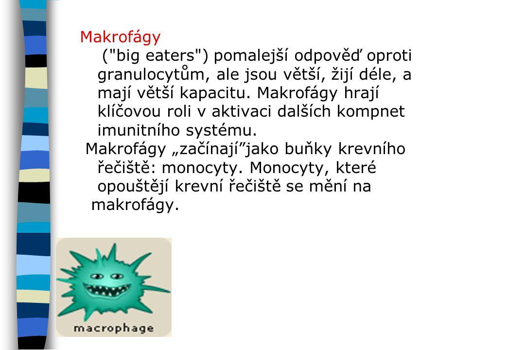 Makrofágy (