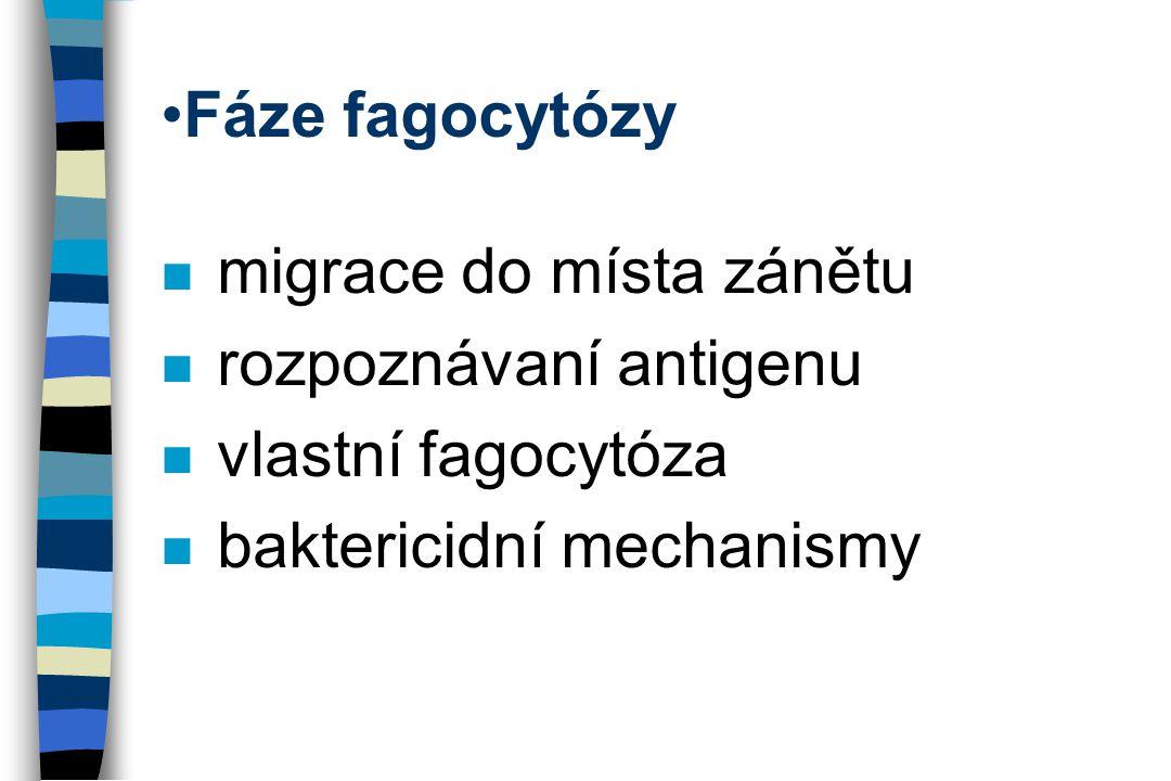 Fáze fagocytózy n migrace do místa zánětu n rozpoznávaní antigenu n vlastní fagocytóza n baktericidní mechanismy
