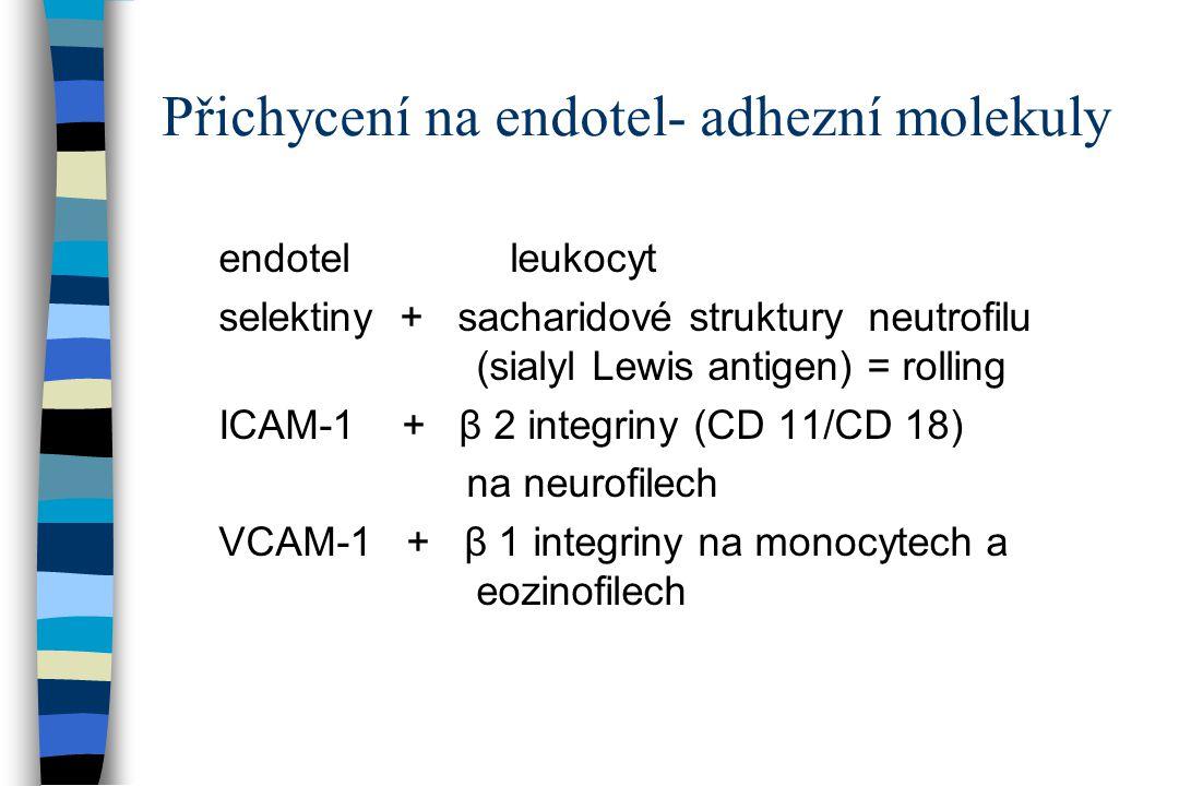 Přichycení na endotel- adhezní molekuly endotel leukocyt selektiny + sacharidové struktury neutrofilu (sialyl Lewis antigen) = rolling ICAM-1 + β 2 in