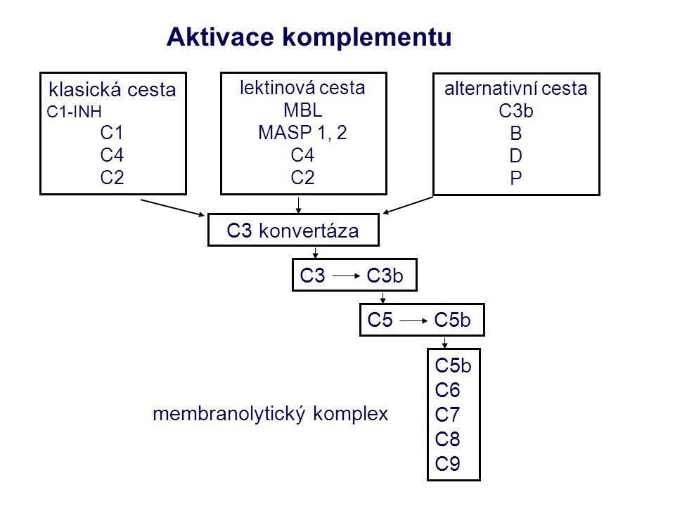 Aktivace komplementu membranolytický komplex klasická cesta C1-INH C1 C4 C2 lektinová cesta MBL MASP 1, 2 C4 C2 alternativní cesta C3b B D P C3 konvertáza C3 C3b C5 C5b C5b C6 C7 C8 C9
