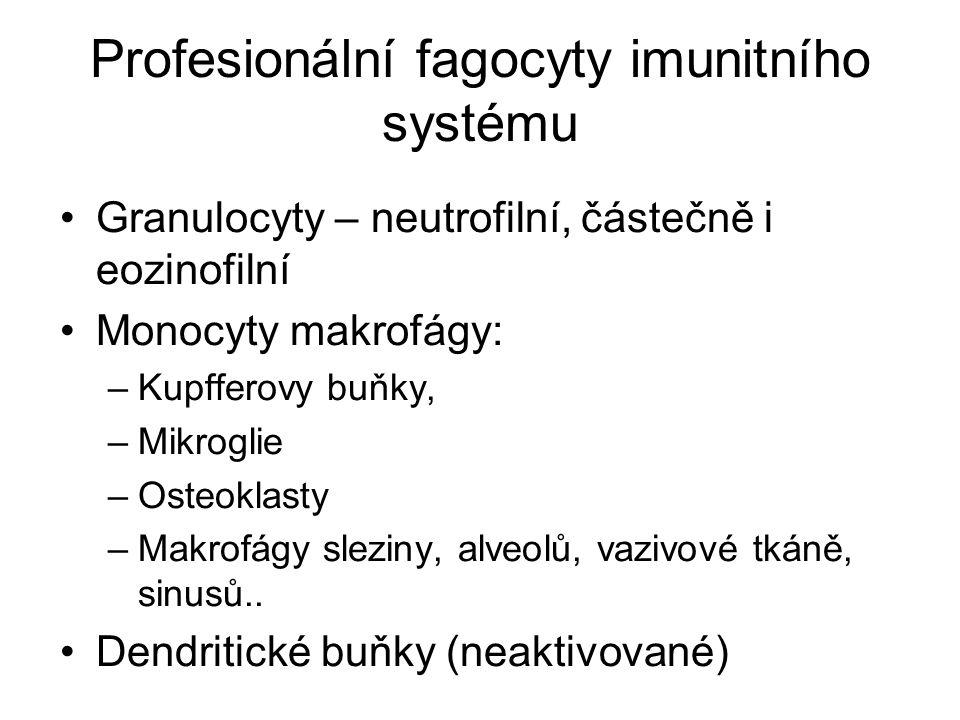 Profesionální fagocyty imunitního systému Granulocyty – neutrofilní, částečně i eozinofilní Monocyty makrofágy: –Kupfferovy buňky, –Mikroglie –Osteoklasty –Makrofágy sleziny, alveolů, vazivové tkáně, sinusů..