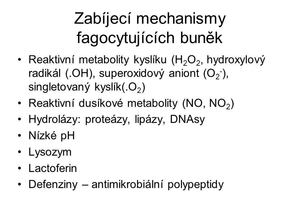 Zabíjecí mechanismy fagocytujících buněk Reaktivní metabolity kyslíku (H 2 O 2, hydroxylový radikál (.OH), superoxidový aniont (O 2 - ), singletovaný kyslík(.O 2 ) Reaktivní dusíkové metabolity (NO, NO 2 ) Hydrolázy: proteázy, lipázy, DNAsy Nízké pH Lysozym Lactoferin Defenziny – antimikrobiální polypeptidy