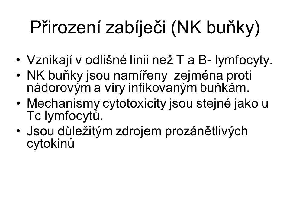 Přirození zabíječi (NK buňky) Vznikají v odlišné linii než T a B- lymfocyty. NK buňky jsou namířeny zejména proti nádorovým a viry infikovaným buňkám.