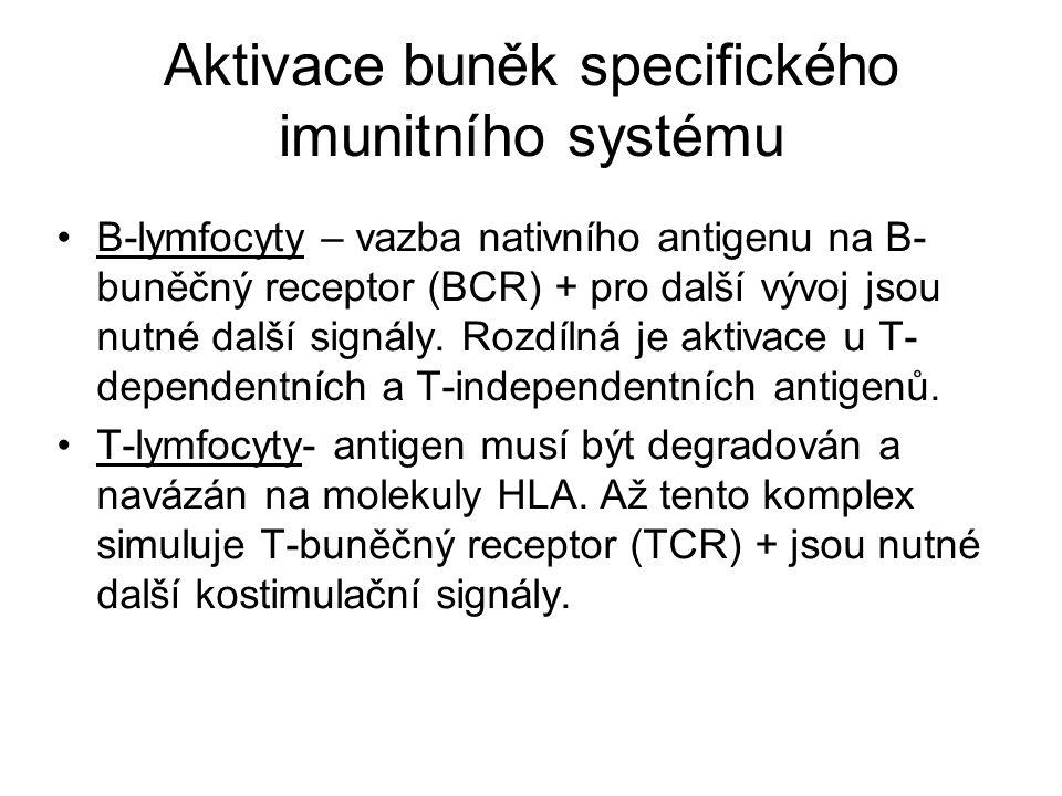 Aktivace buněk specifického imunitního systému B-lymfocyty – vazba nativního antigenu na B- buněčný receptor (BCR) + pro další vývoj jsou nutné další
