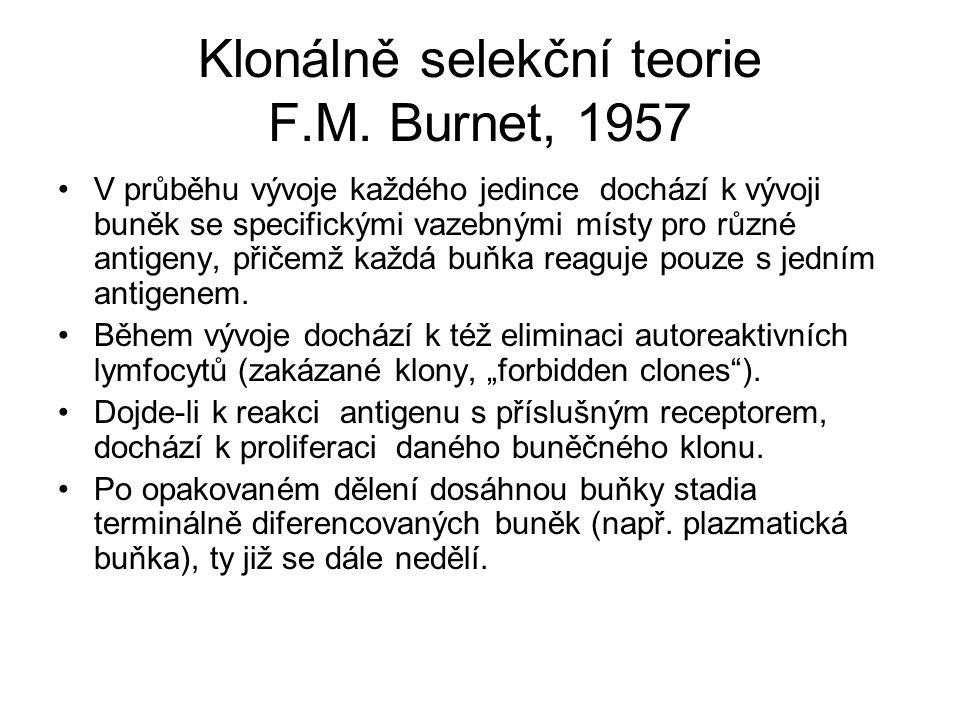 Klonálně selekční teorie F.M. Burnet, 1957 V průběhu vývoje každého jedince dochází k vývoji buněk se specifickými vazebnými místy pro různé antigeny,
