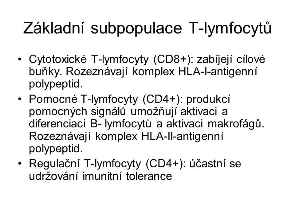 Základní subpopulace T-lymfocytů Cytotoxické T-lymfocyty (CD8+): zabíjejí cílové buňky. Rozeznávají komplex HLA-I-antigenní polypeptid. Pomocné T-lymf
