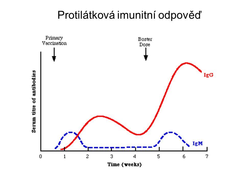 Protilátková imunitní odpověď