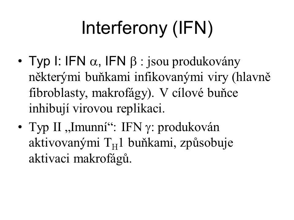 Interferony (IFN) Typ I: IFN , IFN  jsou produkovány některými buňkami infikovanými viry (hlavně fibroblasty, makrofágy). V cílové buňce inhibují