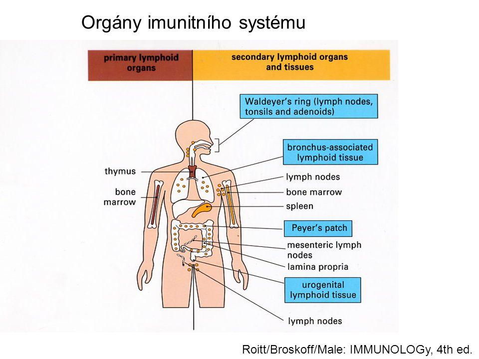 Příklady klinického využití monoklonálních protilátek v léčbě imunopatologických chorob Imunosuprese: anti-CD3 (OKT3), –anti CD25 (basiliximab, daclizumab), –anti CD20 (rituximab) Blokára prozánětlivých cytokinů: –Anti –TNF  (infliximab, adalimumab) – revmatoidní artitida, Crohnova choroba, Blokáda adhezivních molekul: –anti integrin  4  1 (natalizumab) – roztroušená mozkomíšní skleróza –Anti-CD11a (efalizumab) - psoriáza Protialergická léčba –anti-IgE (omalizumab): těžké formy astmatu