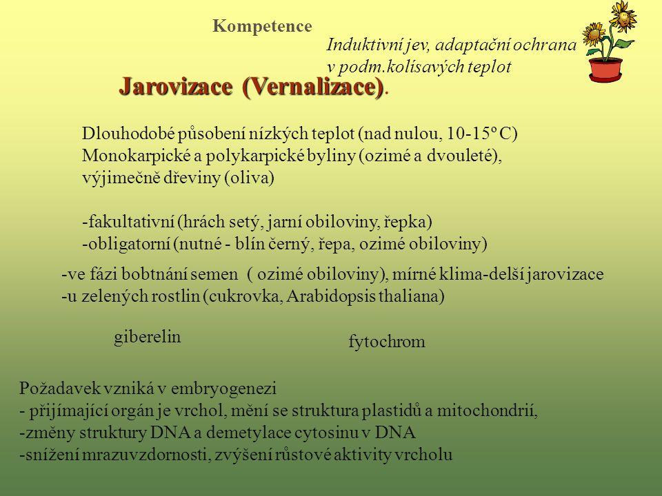 Jarovizace (Vernalizace) Jarovizace (Vernalizace).