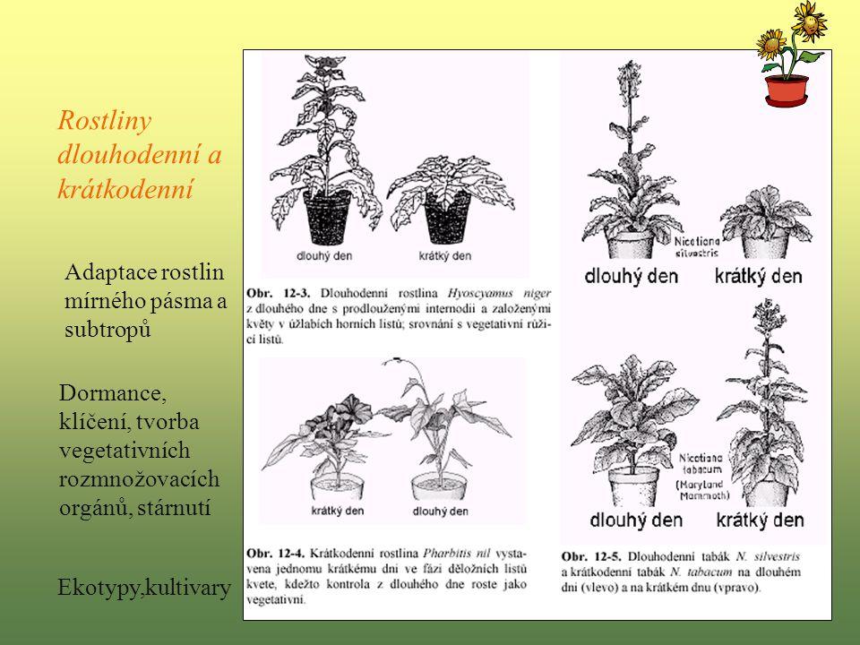 Rostliny dlouhodenní a krátkodenní Adaptace rostlin mírného pásma a subtropů Dormance, klíčení, tvorba vegetativních rozmnožovacích orgánů, stárnutí Ekotypy,kultivary